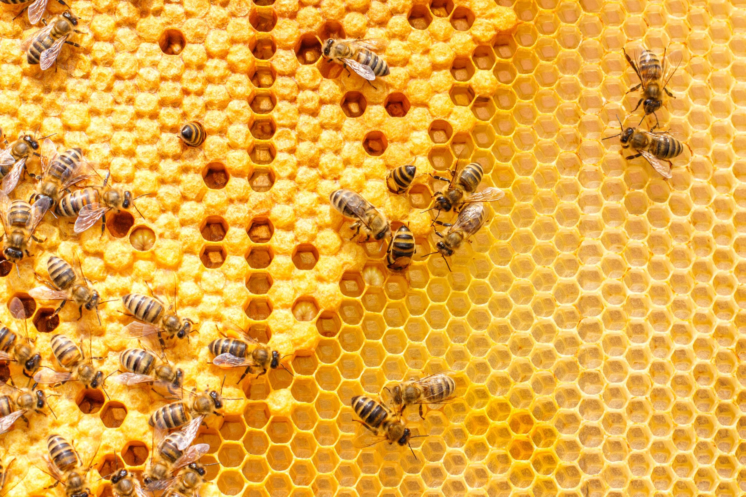 api - collegio immacolata
